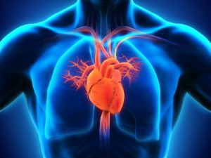 A new way to regenerate hearts after they have stopped has been developed by the University of Oxford. Image Credit: Nerthuz