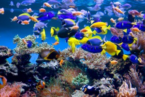 A new study has shown that watching aquariums and fish tanks can improve heart health. Image Credit: User10095428_393