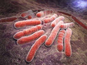 Immunotherapy is more likely to be successful in patients with greater gut bacteria diversity, according to new research. Image: ILexx via iStock
