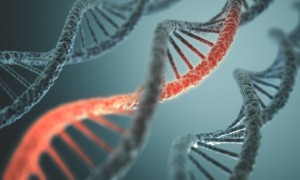 Scientists have been exploring a common genetic fault that puts people at increased risk of heart failure. Image: ktsimage via iStock