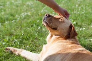 Nurses believe that interacting with animals could help to significantly boost patient recovery. Image: aerogondo via iStock