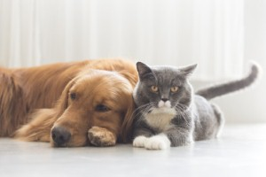 Animal therapy helped to boost mental health patients engagement with an occupational therapy programme at a Manchester hospital. Image: chendongshan via iStock