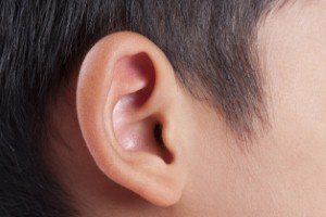 A new genetic study may pave the way to create hearing loss-reversal therapies.